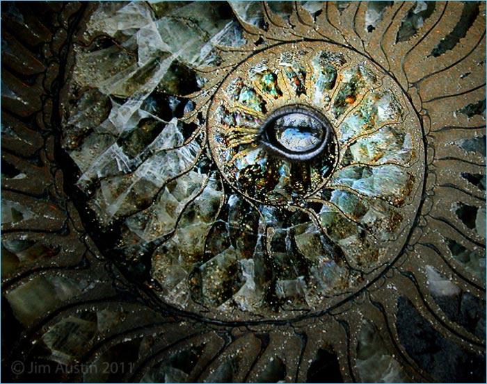 Photo of ammonite and eye layered in Adobe Photoshop CS5 by Jim Austin