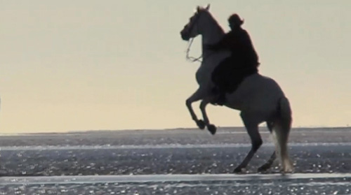 Photo of horse on beach by Gert Wagner