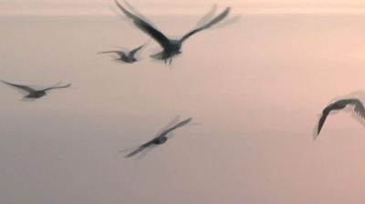 Blurred photo of flying seagulls by Gert Wagner