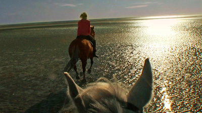 Photo of horses ears and another horse and rider taken from back of horse.