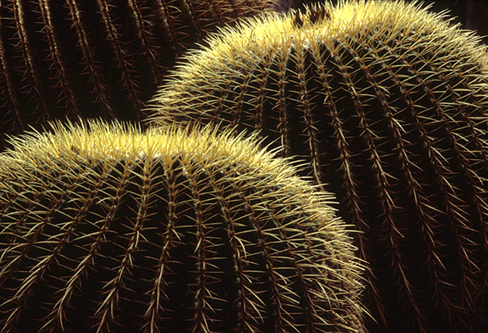 Close-up photo of rim light on cactus by Noella Ballenger