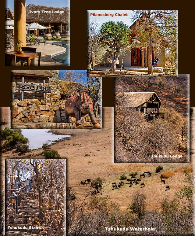 Image collage of Tshukudu Lodge and waterhole, Pilanesber Lodge and Ivory Lodge in South Africa by Noella Ballenger.