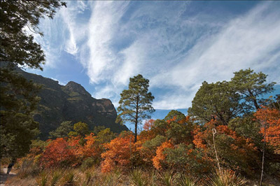 Photo of McKittrick Canyon at Guadalupe Mountains National Park, Texas by Gary Nored
