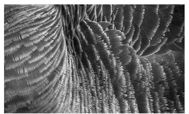 Photo of feathers of a bird called Feathered by Jim Austin