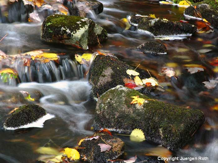 Fall photo of leaves and rocks at Acadia NP Duck Pond Brook with silky water effect by Juergen Roth