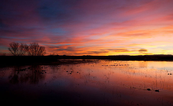 "Photo of sunrise from the ""Flight Deck"" at Bosque del Apache by Richard Mittleman"