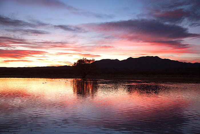 Photo of sunset at the Crane Ponds at Bosque del Apache by Richard Mittleman
