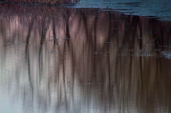 Reflection photo of trees in pond at Bosque del Apache by Noella Ballenger
