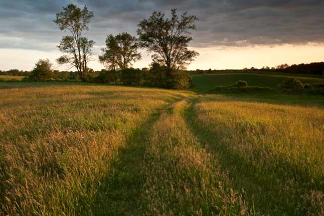 Backyard Photography: Vehicle trail made in hills of grassy field by Randall Romano