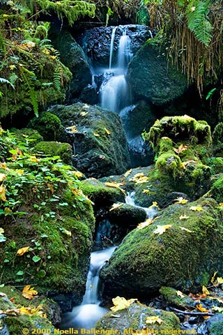 Photo of a waterfall at Fern Creek along the northern California coast by Noella Ballenger