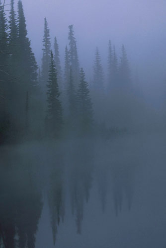 Photo of trees reflecting on lake in the fog by Andy Long