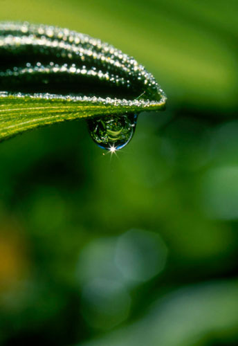 Photo of reflection in dew drop on plant by Andy Long