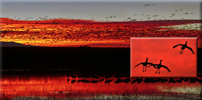 Scenic photo of sunrise & sunset with Snow Geese & Sandhill Cranes at Bosque del Apache Wildlife Refuge by Noella Ballenger