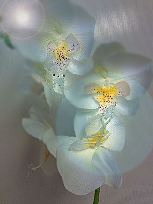 Image of white silk flowers captured and post-processed with a smartphone by Allen Moore.