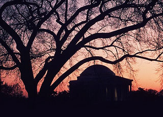 Silhouette image of the Jefferson Memorial and branches of a tree in Washington D.C. by Steve Gottlieb.