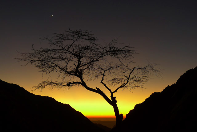 Silhouette of a tree and mountain using backlighting in Sinai, Egypt by Omar Attum.