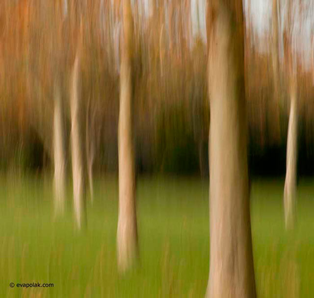 Blurred image of trunks of trees in green grass showing progressive rhythm composition by Eva Polak.