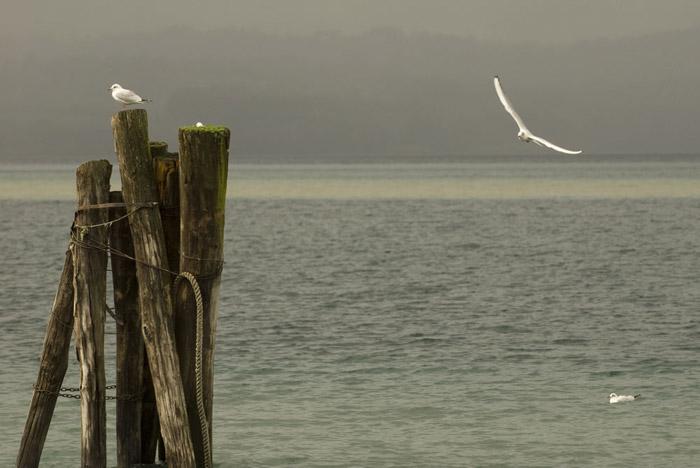Seascape and seagull photo by Piero Leonardi