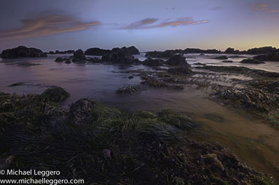 Pre-photo manipulation - Ocean seaweed bed by Michael Leggero