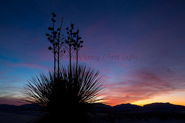 Silhouetted image of a cactus plant at White Sands National Monument in New Mexico by Andy Long.