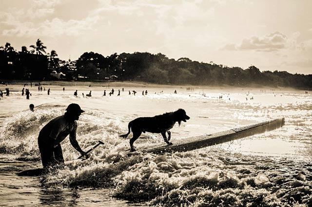 Dog Surfer Silhouette, Noosa, Australia