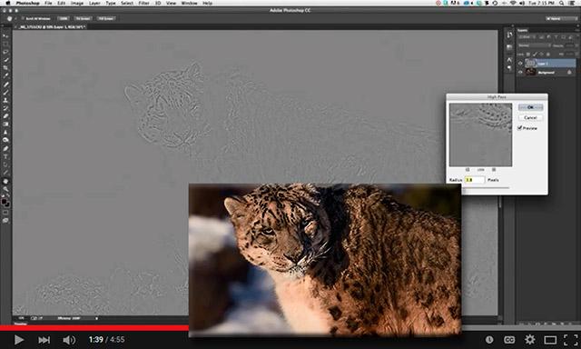 Screen shot of a leopard using Photoshop's high pass filter by Adam Furtado.