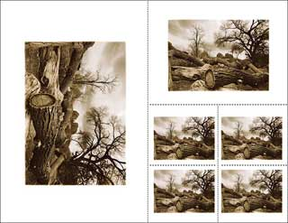Example of how a 17x22 mat can be cut for multiple images by Andrew Darlow.