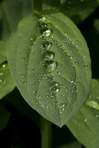 Close-up photo of rain drops on leaves by Andy Long