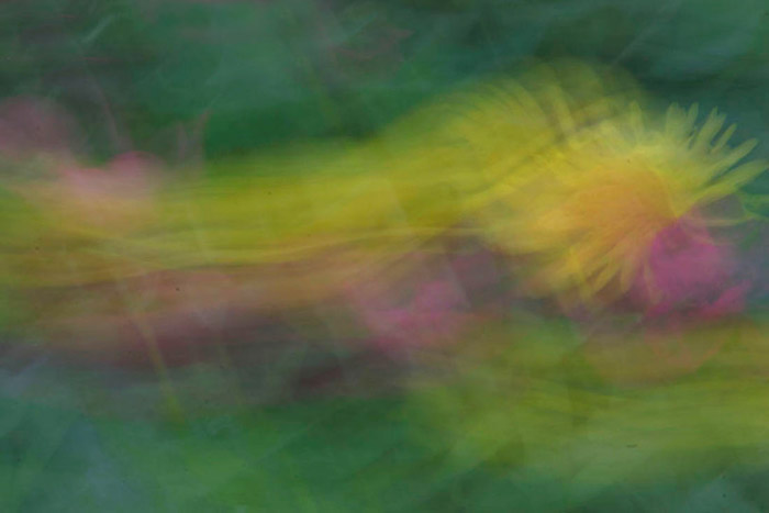 Abstract photo of flowers by Andy Long