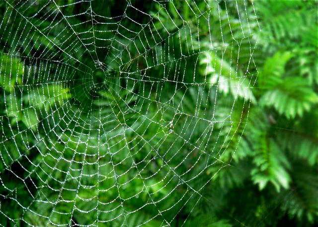 Spider web photo by Michelle Ricketts
