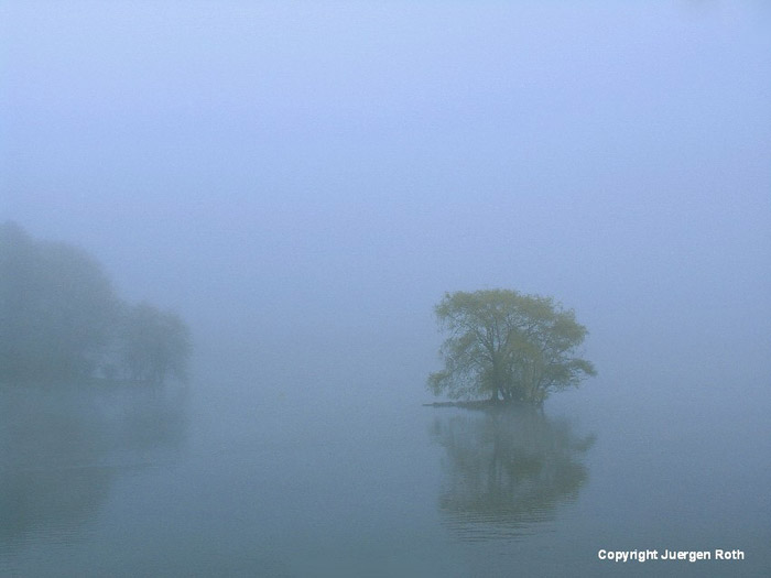 Image of a tree and its reflection in the fog on a Jamaican pond by Juergen Roth.