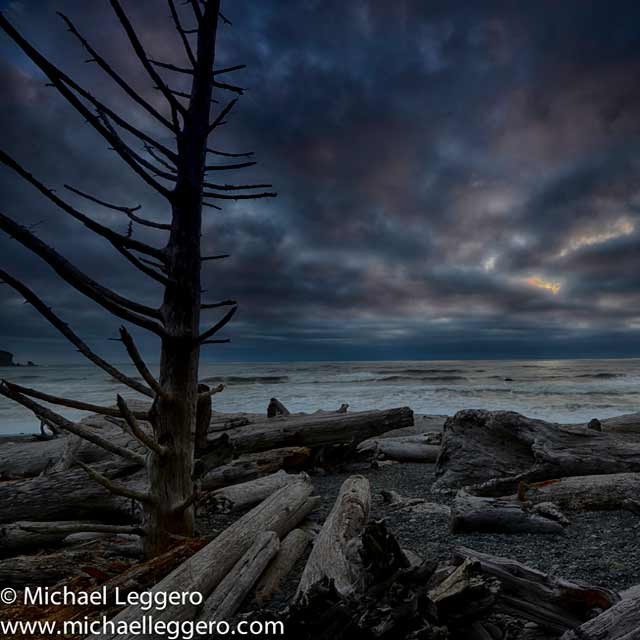 Dark stormy skies over tree and driftwood along shoreline in the Olympic Peninsula in Washington by Michael Leggero.