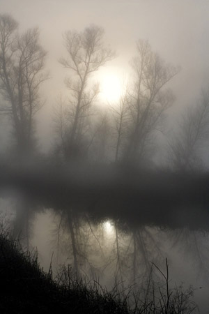 Photo of Tule Fog in California by Noella Ballenger