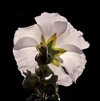 Photo of flower by Noella Ballenger
