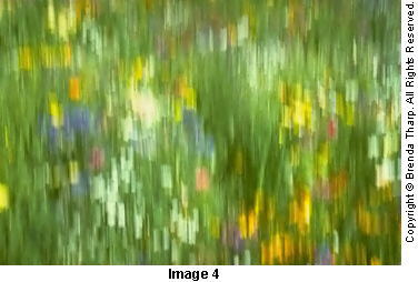 Photo expressions: A 1/2 second panned exposure created this abstract of a field of wildflowers by Brenda Tharp.