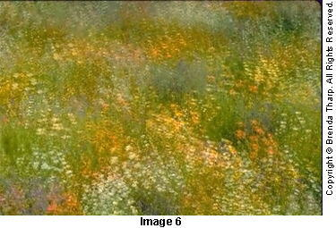Photo expressions: Sixteen exposures on one frame were used to create this pointillistic effect of a wildflower meadow by Brenda Tharp.