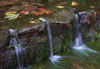 Image of fall leaves and flowing water of Fern Spring, Yosemite National Park, Calififornia by Gary Anthes.