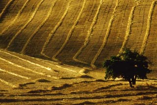 Rows of cut hay in a field in Livermore, California by Noella Ballenger.