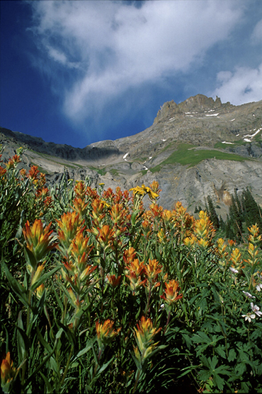 Photo of Yankee Boy Basin in Colorado by Andy Long.