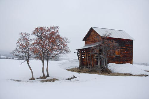 Photo of cabin and trees in snow with over saturation of Red Channel by Andy Long