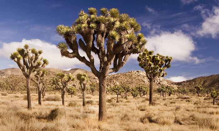 Joshua Tree National Park Photography Guide And Tips