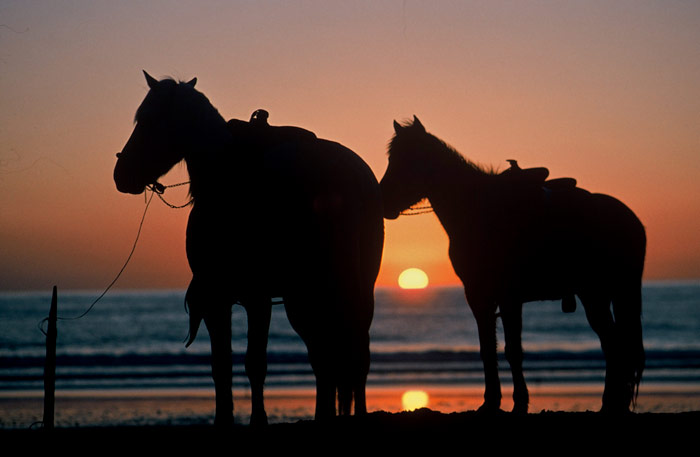 Silhouette photo of horses at Rosario Beach, Mexico by Ron Veto