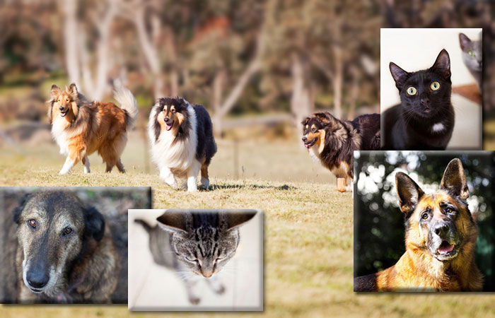 Photo of dogs and kitties adopted from DCH Animal Adoptions in Sydney, Australia by Cathy Topping