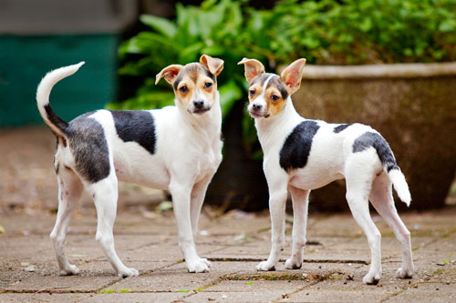 Photo of two dogs adopted from DCH Animal Adoptions in Sydney, Australia by Cathy Topping