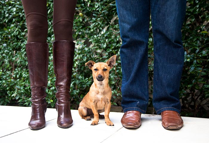 Photo of little dog and owner's legs. Dog adopted from DCH Animal Adoptions in Sydney, Australia by Cathy Topping