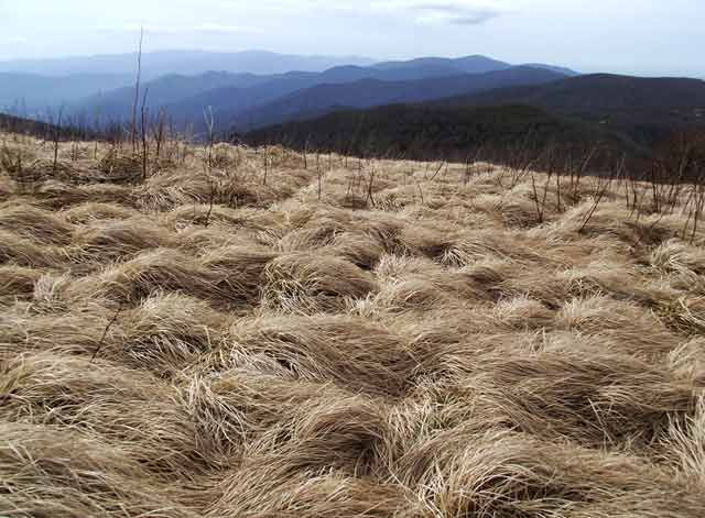 Photo adventures day hike: image of grasses and mountain background at top of trail, Rocky Mountain National Park by Jeff Doran.