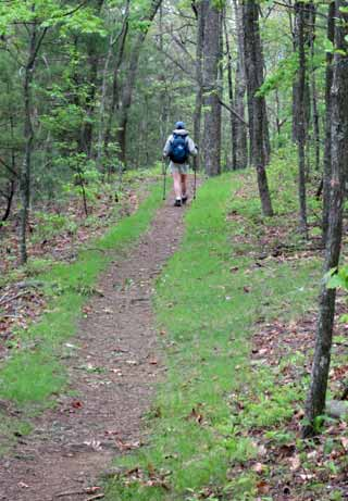 Photo adventures day hike: Hiker in woods on Ptarmigan Wall trail, Glacier National Park by Jeff Doran.
