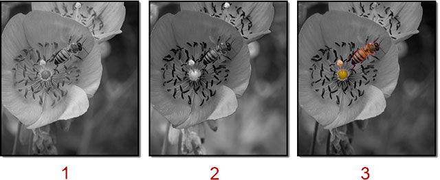 Screen shot of flower changed to black and white and hand-colored bee using Photoshop Black & White Adjustment Layer by John Watts.