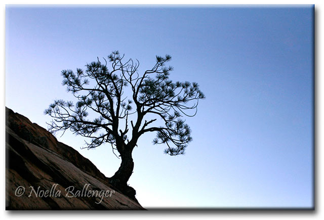 Silhousette of a lone tree growing out of rocks in early dawn at Zion National Park by Noella Ballenger.