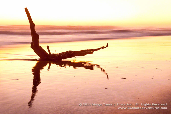 Reflection photo of driftwood on shores of the outer banks of North Carolina by Margo Taussig Pinkerton.